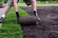 Trawnik w rolki. Fot. Fotolia