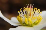 Krzewy kwitnące zimą są rzadko spotykane, ale mogą stać się dekoracyjnym urozmaiceniem ogrodu.