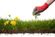 Przewiewna, odpowiednio wilgotna, pełna składników mineralnych – taka gleba jest najlepsza dla większości roślin ogrodowych.