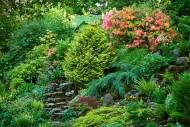 Tamaryszki to odporne suszę i zasolenie, efektownie kwitnące krzewy. Jednak w krótkim czasie mogą szeroko się rozrosnąć.